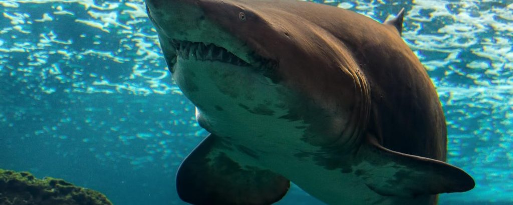 """Great White Really Hoping to Score """"Major Pussy"""" After Appearing on Shark Week"""